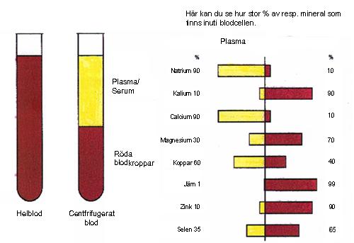 Vad är serum i blodet